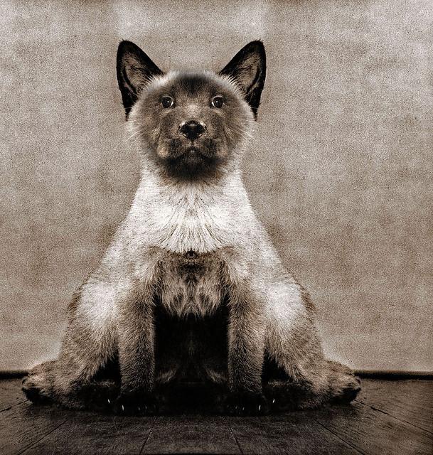A Cat Named Dog