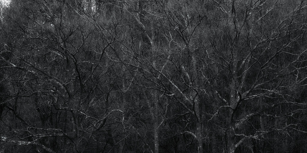 grove of trees ( High-Resolution )