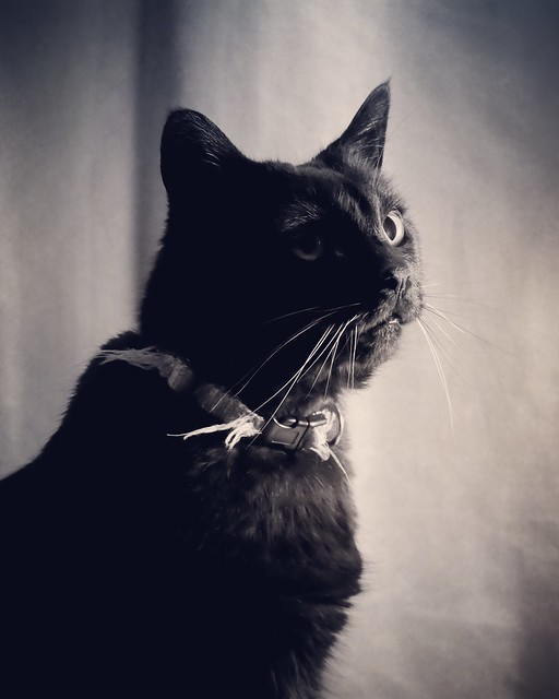 Kitty portrait session