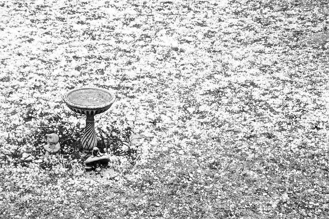 HAIL IN SCULLIN