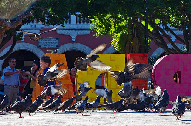 Pigeons in Mérida, Yucatan, Mexico.