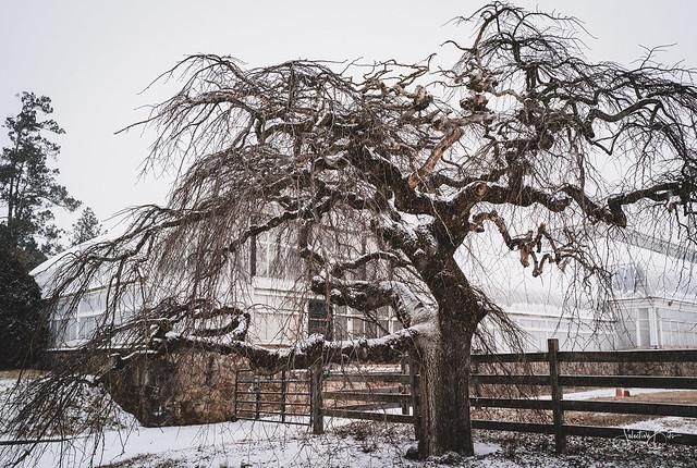 A tree with no leaf