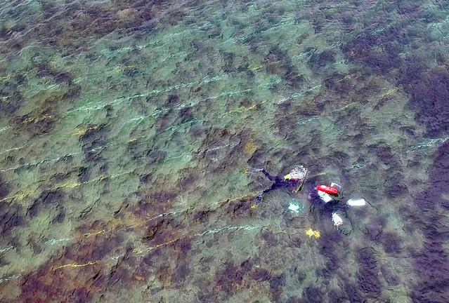Needle in a very big haystack - searching for handfish #marineexplorer @handfishproject
