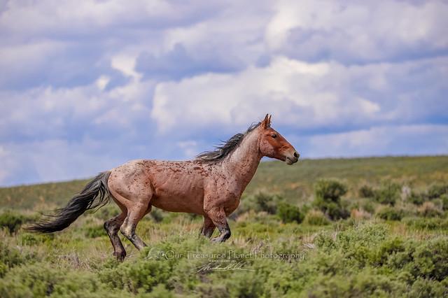 Tashunka Running - Wild Horse