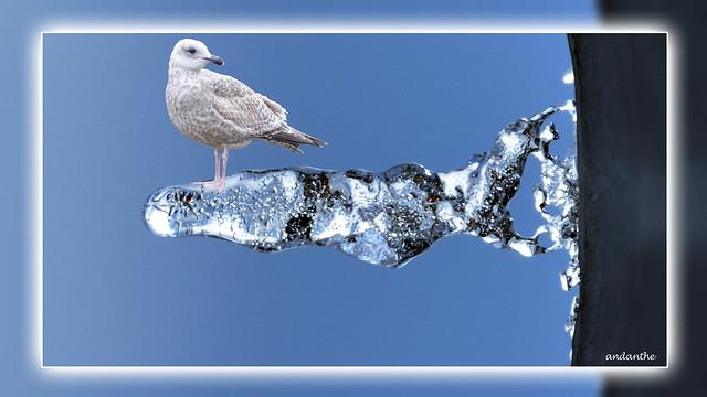 5 Icetabgull