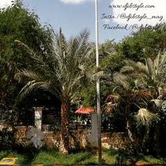 Somewhere in Djibouti 😁😁😁 Indice : c'est à Balbala . . . #travelphotograhy #travel #Djibouti #Discovery #whereisthisplace #Eastafrica #Africa #gardendesign #garden