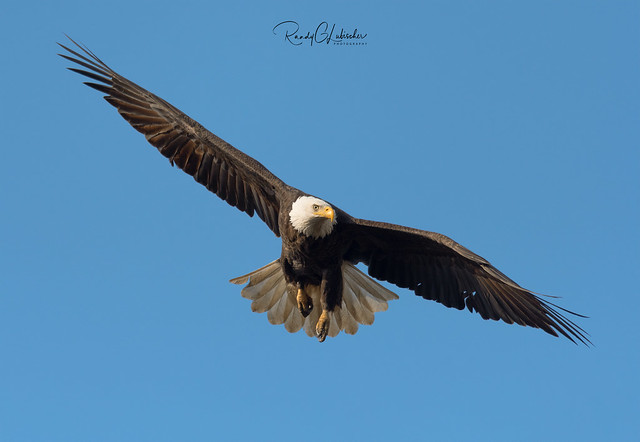 Bald Eagles of New Jersey | 2020 - 6