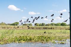 2019.07_Malawi_Mvuu National Park