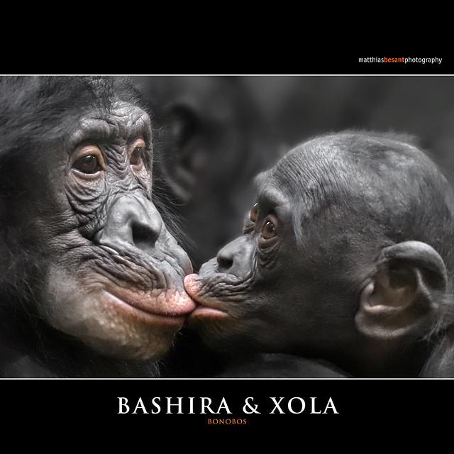 BASHIRA & XOLA