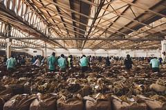 2019.07_Malawi_Lilongwe Tobacco Auction