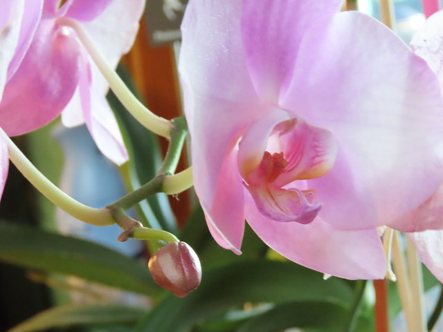 Kitchen Orchid-5