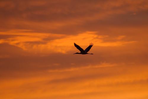 birds sunrise titusville maxbrewermemorialparkway canonef100400mmf4556lisusm