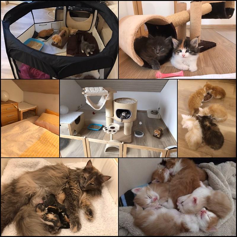 Kittenstube