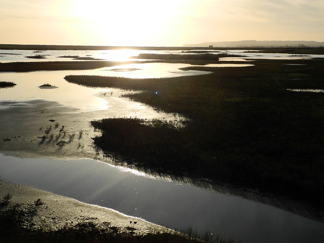 Rye Harbour Nature reserve in winter