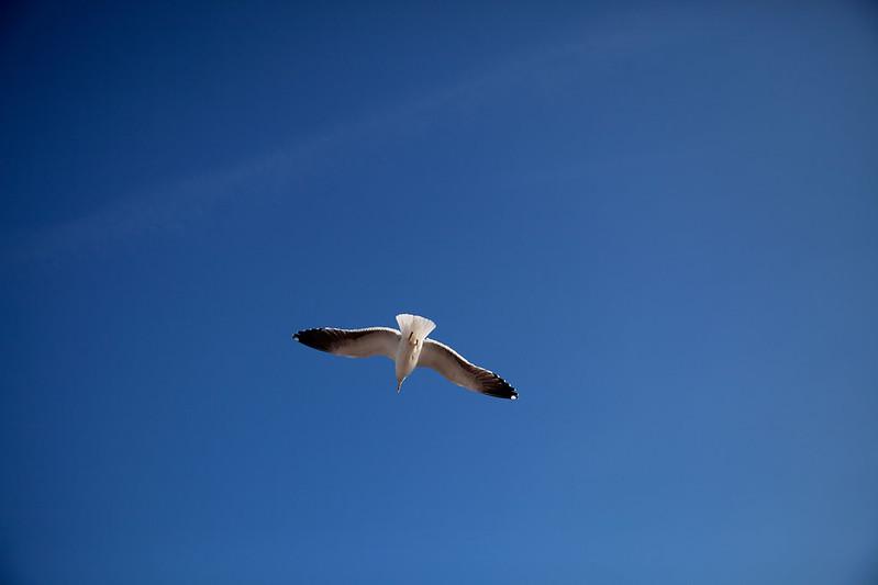 Birds in Portugal