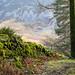 Path in Lanthwaite Wood