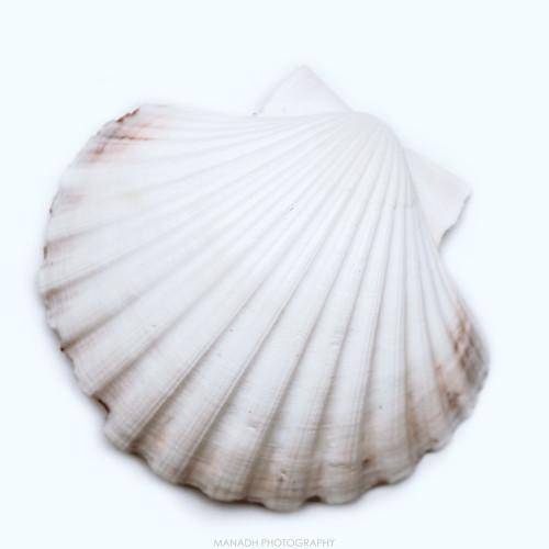 Shell // 20/01/2020