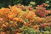 Dawes Arboretum (54)