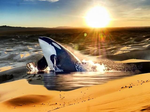 orque desert