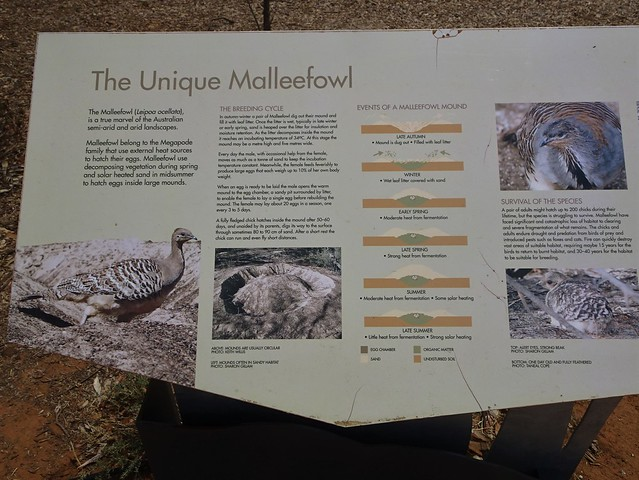 Patchewollock. Information board on the Mallee Fowl. Sited next to three giant metal sculptures of Mallee Fowls.