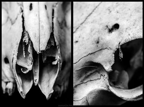 Skulls // 17/01/2020