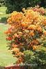 Dawes Arboretum (55)