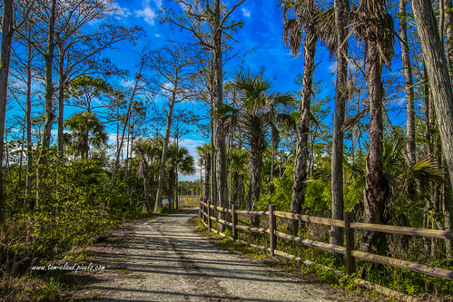 sky bluesky clouds cloudy weather trail hikingtrail hikeing nature mothernature trees fence fenceline outdoors landscape cypresscreek naturalarea cypresscreeknaturalarea jupiter florida usa