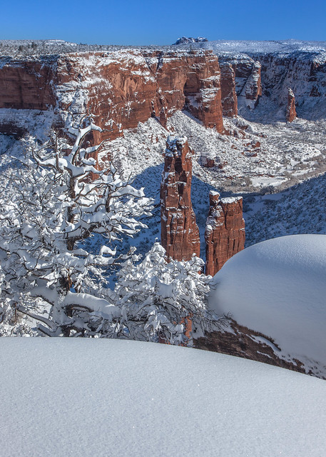 Spider Rock snow tree