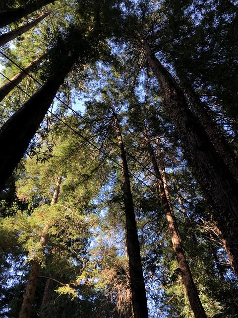 Mill Valley Muir Woods