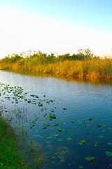 Everglades in Winter