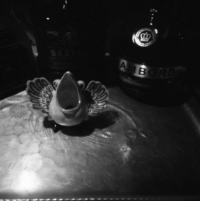 bird on a tray