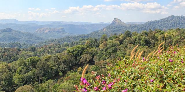 Karadipara View Point, Munnar