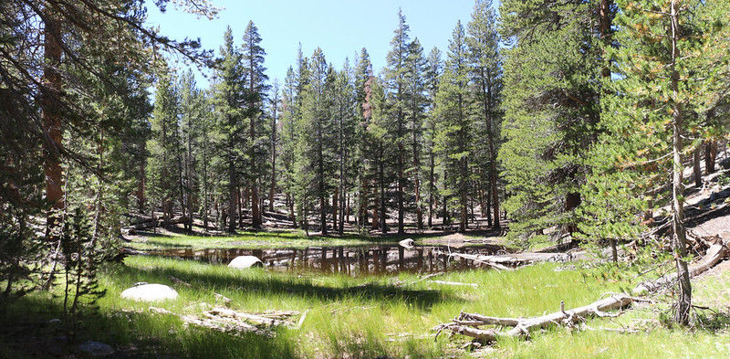 Small pond in a meadow along Barigan Stringer on the way to Rocky Basin Lakes