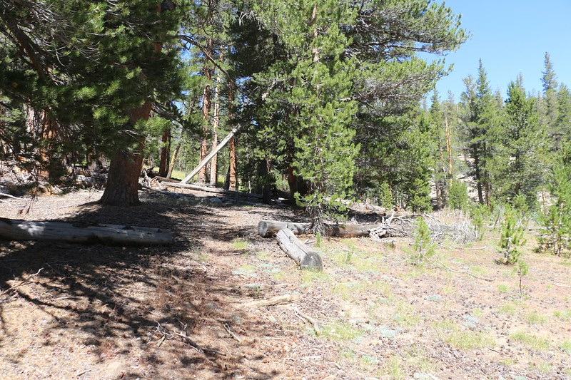"""The old topo map said """"Location Approximate"""" about the trail to Rocky Basin Lakes - those sawn logs are a clue"""