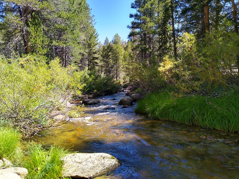 Looking upstream on Golden Trout Creek