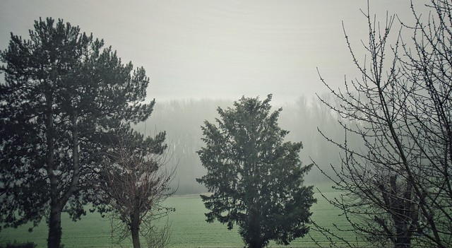 A foggy winter day