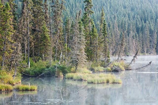Parc national de la Gaspésie, Petit Lac Cascapédia, matin d'août
