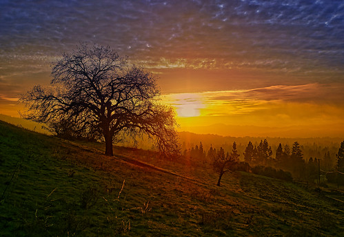 sunset limeridge fog trees hills steve omd olympus landscape