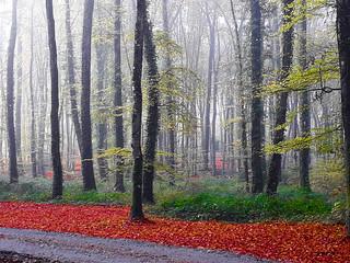 Dans les bois.