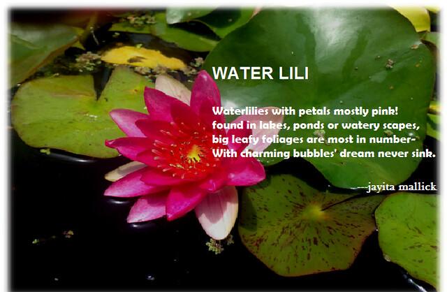 the lili