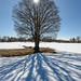 ouky a solitérní stromy na Knížecích pláních, foto: Jan Hocek