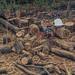 Day 21 - Summer Lumberjacking