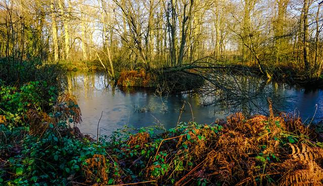 On Frozen Pond?