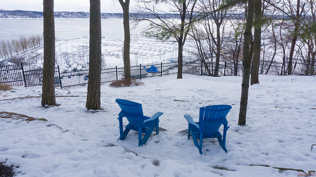 Winter, hiver - Parc du Bois-de-Coulonge, Québec, Canada  - 3397