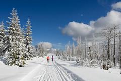 Střední Šumava: Modravsko – Pláně – Strážný na běžkách