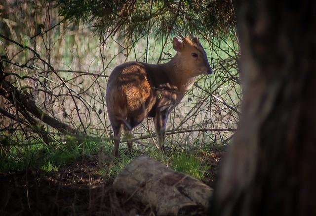 The Center parcs deer