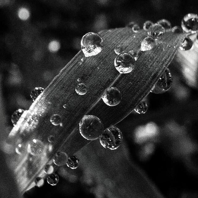 Formas de agua