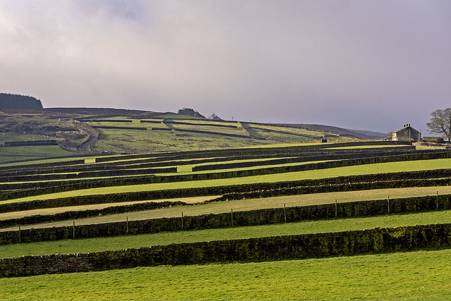 Field walls on the edge of Stanbury, West Yorkshire
