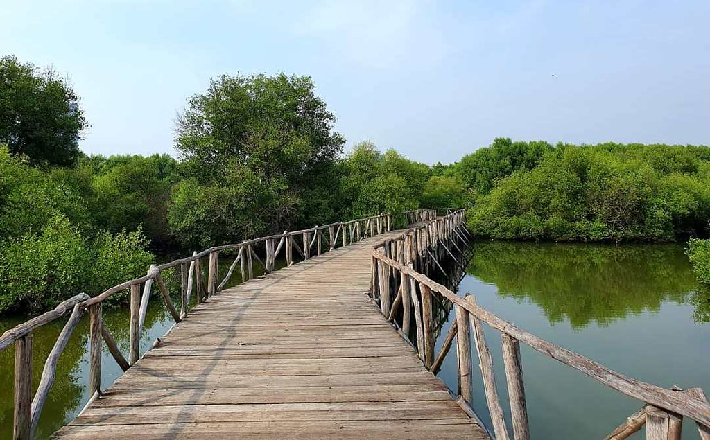Semitic Mangrove Tourism