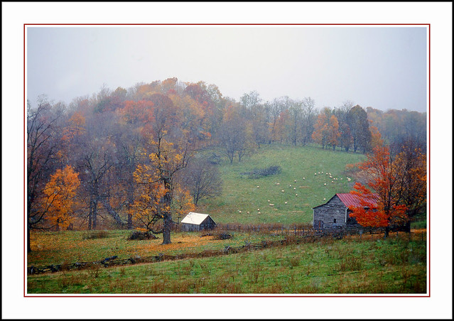 Old-time Sheep Farm - Virginia, 1996